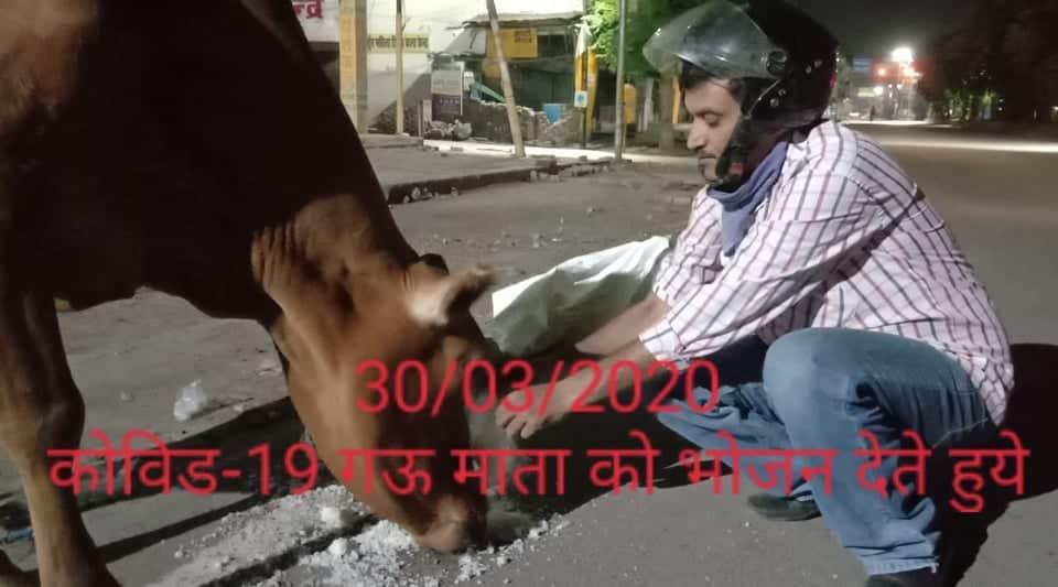 /media/aadarsh/309-Covid-Feeding_Cow.jpeg