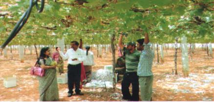 /media/rds/1NGO-00301-Rural_Development_Society-Activities-Irrigation_and_Agricultural_Program.JPG