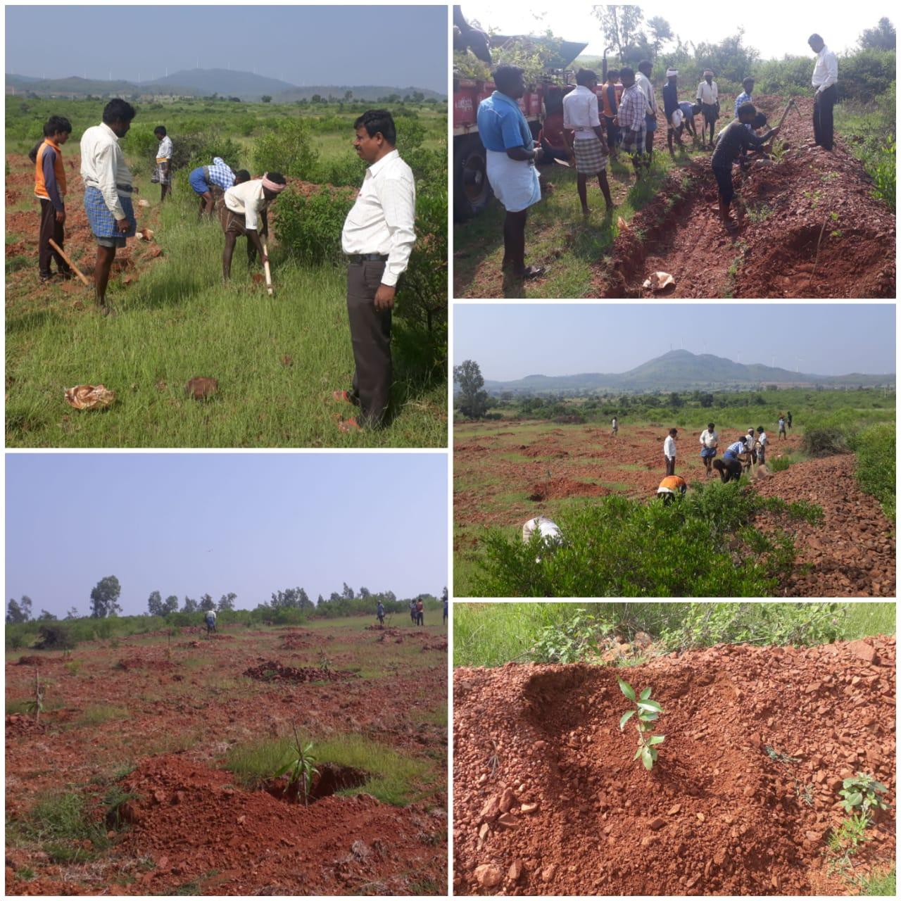 /media/speech/1NGO-00056-SPEECH-Activities-Plantation_Field_Work.jpeg